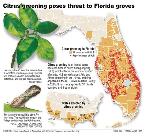 florida orange groves map citrus greening florida s bittersweet harvest