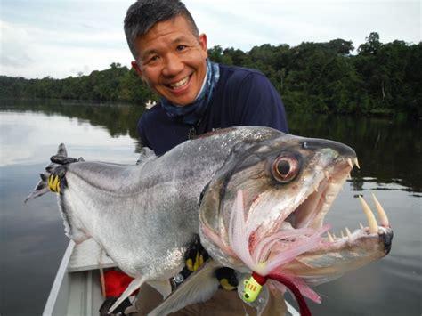 amazon fish incredible fish of the amazon fly fishing portraits