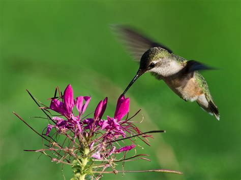 37 flowers that attract hummingbirds to your garden total survival