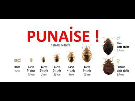 Entreprise Punaise De Lit 3250 by Entreprise Punaise De Lit Entreprise Traitement D