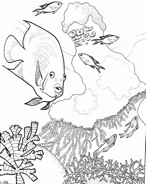 great barrier reef coloring pages sketch coloring page
