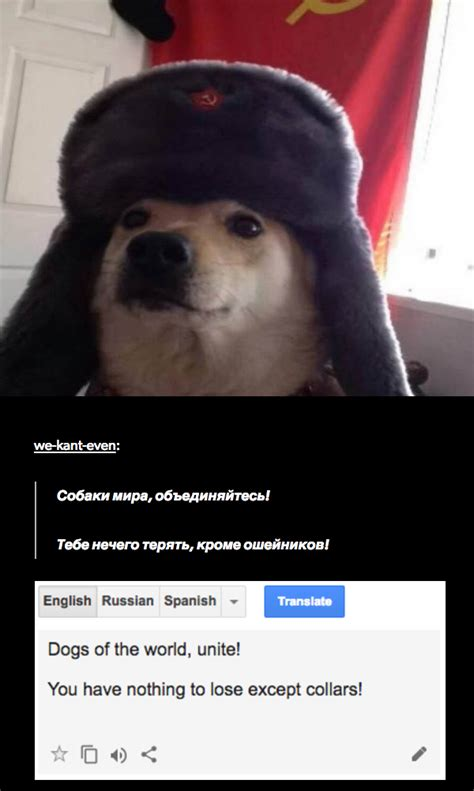 Russian Cat Meme - russia dog russian cat translations know your meme