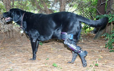 torn acl brace has torn acl needs surgery who s been through it