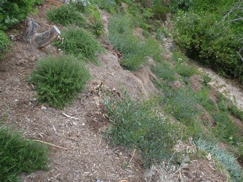 steep slope drainage erosion control biotechnical bank stabilization plantings growing