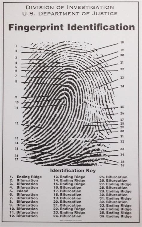 Fingerprint Background Check Florida Florida Therapists Must Submit Fingerprints To Fdle By January 31 2015