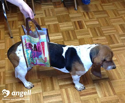 Web Slinging Spi Dogs by How To Make A Supportive Sling Mspca Angell