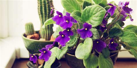 worst common houseplants  allergies allergy air