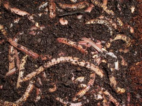 types of worms types of worms types of everything