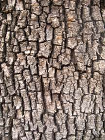tree bark scratchboard textures pinterest