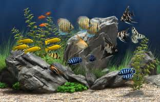 Floor And Decor Jacksonville Florida Dream Aquarium The World S Most Amazing Virtual Aquarium