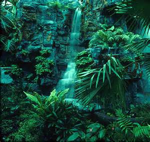 Plants From The Tropical Rainforest - world visits tropical rainforests green plants on the earth