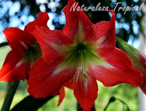 imagenes de flores ornamentales naturaleza tropical galer 237 a fotogr 225 fica de flores de