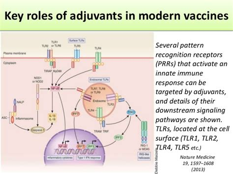 pattern recognition receptors adjuvants prof nkg probiotics vaccines yakult symposium 2015 ssg