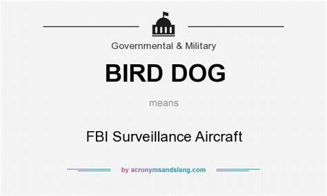 bird dog meaning slang best image of dragon and bird