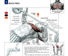 bench press worked equipment guide for beginners names and pictures