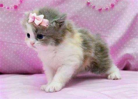 Cat Pink sweet cat pixdaus