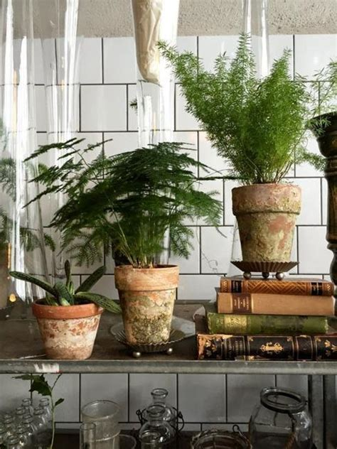 decorate home with plants great house plants for decorating small apartments and homes