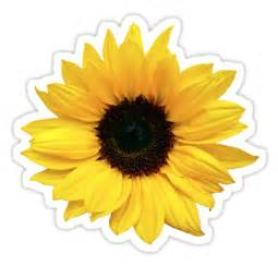 quot sunflower flower floral yellow brown quot stickers by