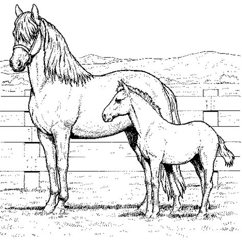 coloring pictures of a horse horse coloring pages coloring pages to print