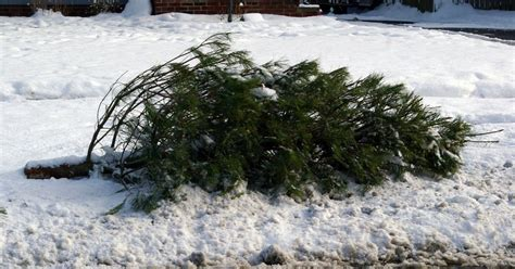 when should i take my christmas tree down after december