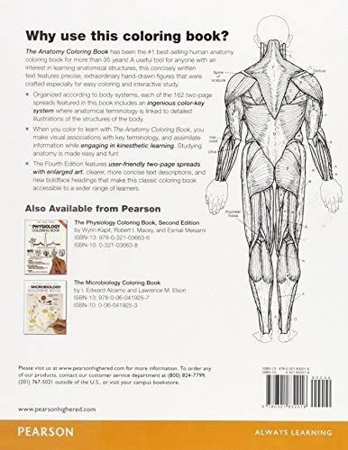 anatomy coloring workbook answers chapter 14 the anatomy coloring book buy in uae paperback
