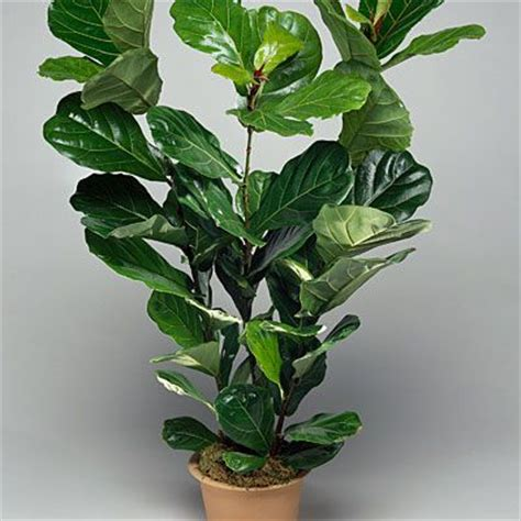 good houseplants for low light 17 best ideas about low light houseplants on pinterest