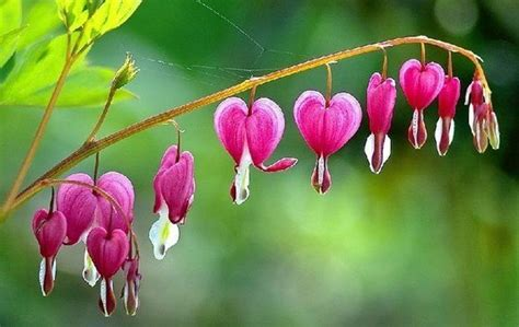 world best flower what are the best flowers in the world quora