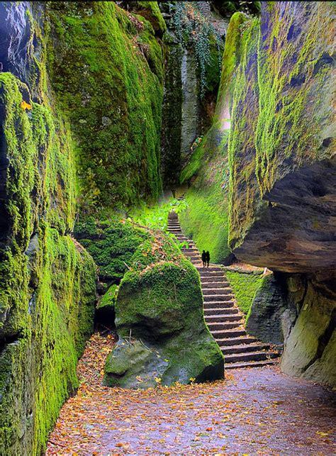 italian nature of photographs 0714859486 steps leading to la verna tuscany italy places to go tuscany italy tuscany