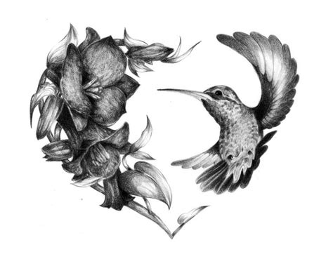 bevalet s hummingbirds and flowers a vintage grayscale coloring book vintage grayscale coloring books volume 3 books 25 best ideas about hummingbird on