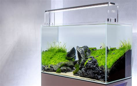 aquascaping ada the world s best photos of 60p and aquascape flickr hive