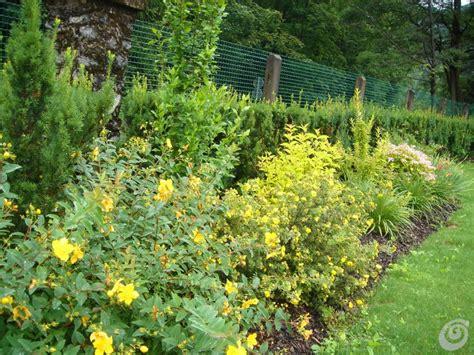 arbusti fioriti da giardino un giardino per una villa d epoca casa e trend