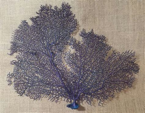 dried sea fans for sale 1000 images about living on