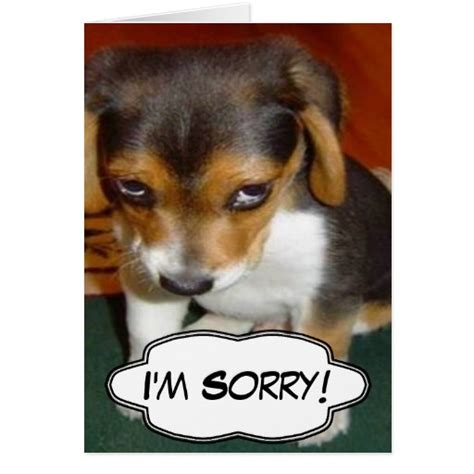 im sorry puppy sad puppy i m sorry card zazzle