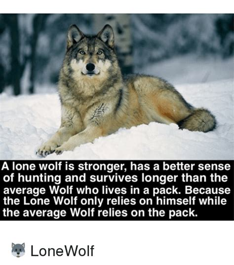 Wolf Pack Meme - 25 best memes about lone wolf lone wolf memes
