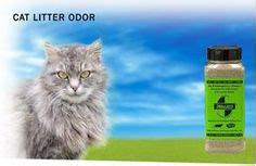 cat urine smell in basement 1000 images about how to remove smell on
