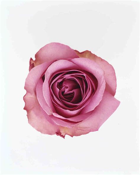 meanings of colors of roses the meaning of colors martha stewart weddings