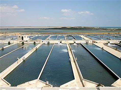 layout of sea bass hatchery marine raceway farming of european seabass and gilthead