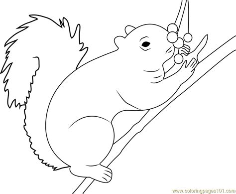 coloring page gray squirrel squirrel eating berrys coloring page free squirrel