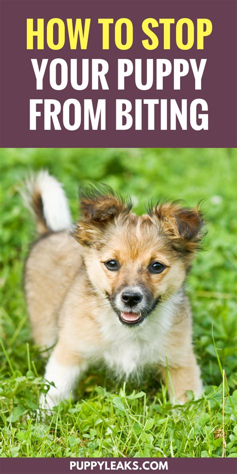 puppy biting everything 3 simple ways to stop your puppy from biting puppy leaks