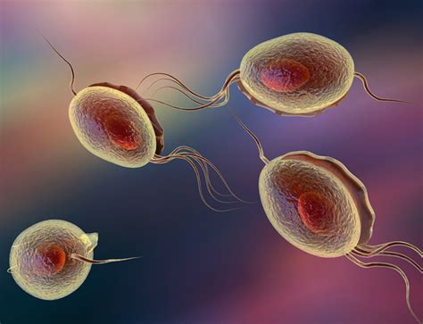 trichomoniasis testing at home std tests