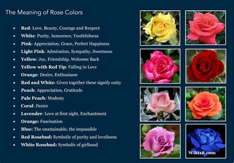 meanings of different colors the meaning of rose colors positivemed