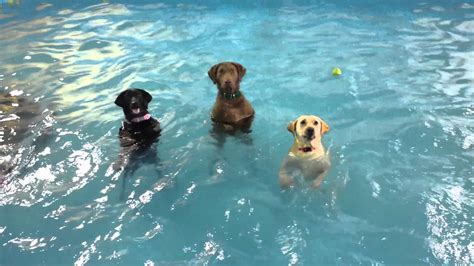 swimming puppy non swimming lessons