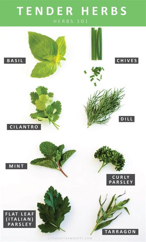 types of garden herbs 17 best images about herb garden ideas on