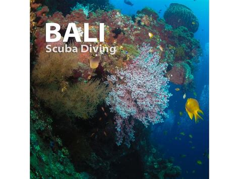 Bali Diving Package bali scuba diving travel and tours