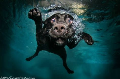 puppies underwater check out more photos of dogs underwater