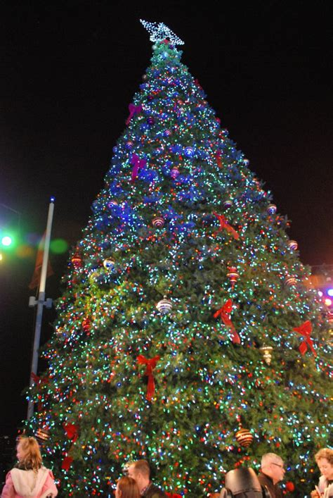 the special 56 foot tree all lit up at christmas on the st