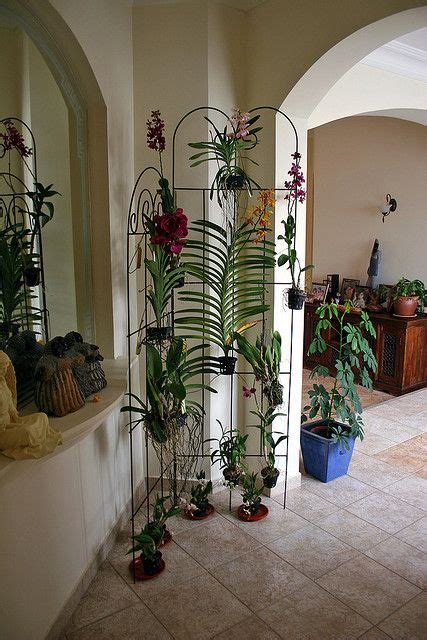 orchid display ideas images  pinterest house