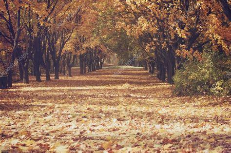 imagenes de paisajes vintage callej 243 n del 225 rbol vintage con hojas cayendo paisaje de