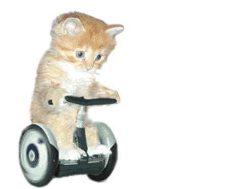 cat  segway scooter transparent gif    toy