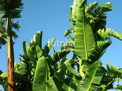 piante palme da giardino quot piante tropicali palme in un giardino quot immagini e